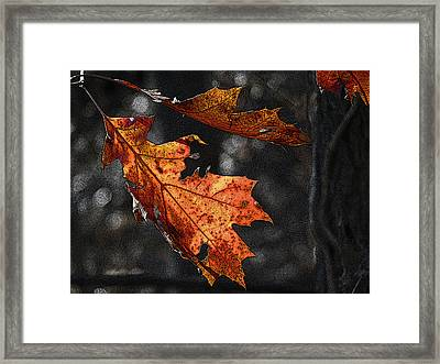 Framed Print featuring the photograph Stained Glass In The Forest Cathedral by William Fields