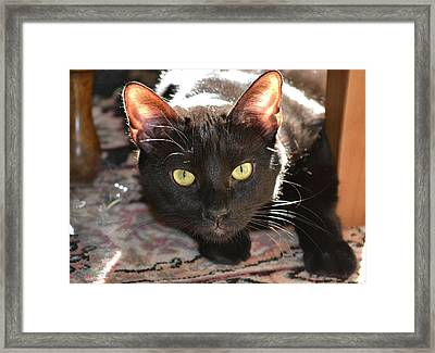 Stalking Framed Print by Mary Zeman