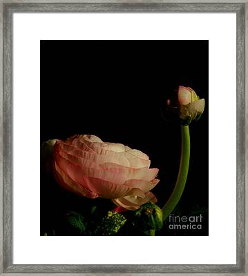 Stalking Petals In The Dark Framed Print by Michael Canning
