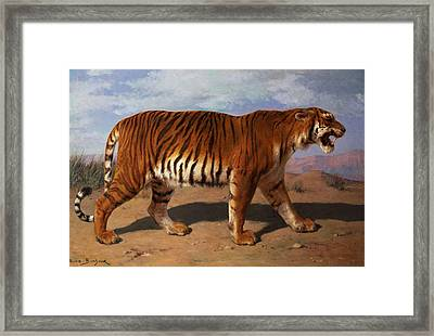 Stalking Tiger Framed Print