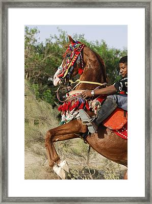 Stallion Framed Print by Igor Sinitsyn