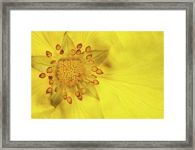Stamen Framed Print by Billy Currie Photography