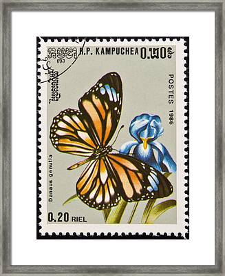 Stamp. Butterfly On Flower. Framed Print by Fernando Barozza