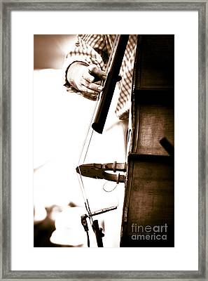 Stand Up Bass Player At Sunfest Framed Print