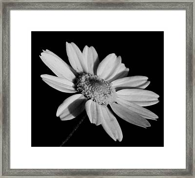 Standing Alone Framed Print by Karen Harrison