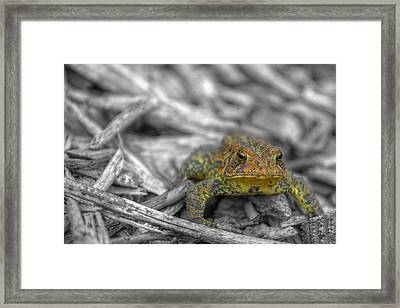 Standing His Ground Framed Print by Randy Steele