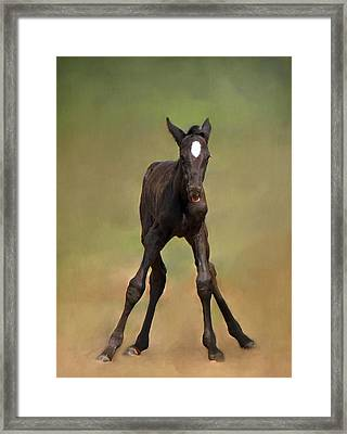 Standing On All Fours Framed Print