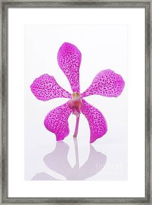 Standing Orchid Head Framed Print by Atiketta Sangasaeng
