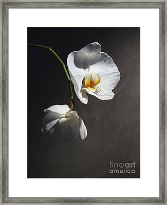Standing Out In The Crowd Framed Print by Joyce Hutchinson