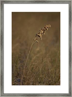 Standing Out Framed Print by Nick  Shirghio