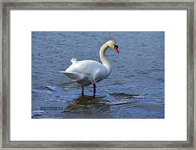 Framed Print featuring the photograph Standing Pretty by Brian Stevens