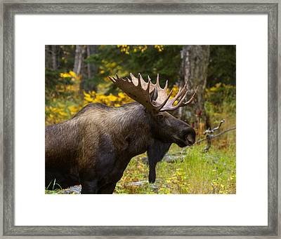 Framed Print featuring the photograph Standing Proud by Doug Lloyd