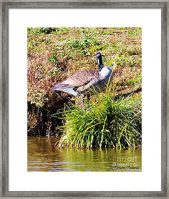 Standing Proud Framed Print by Lorraine Louwerse