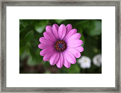 Standing Tall And Proud Framed Print