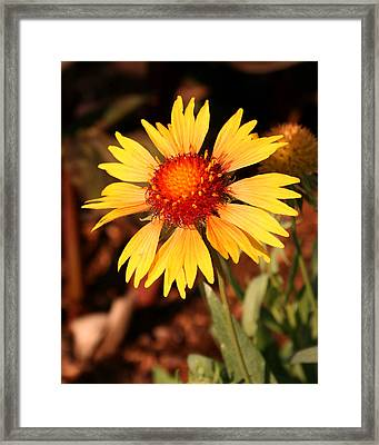 Standing Tall Framed Print by Karen Harrison