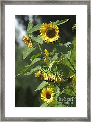Standing Tall Framed Print by Sharon Talson