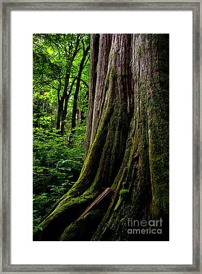 Stanley Park Trees 1 Framed Print by Terry Elniski