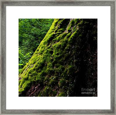 Stanley Park Trees 2 Framed Print by Terry Elniski