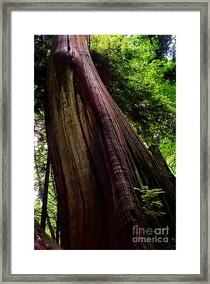 Stanley Park Trees 5 Framed Print by Terry Elniski