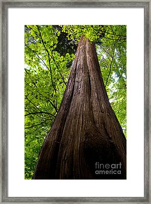 Stanley Park Trees 6 Framed Print by Terry Elniski