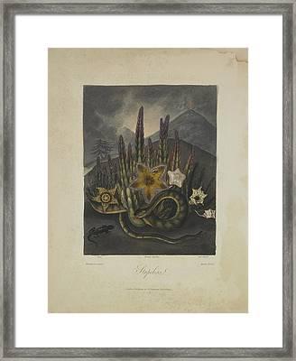 Stapelius Framed Print by Robert John Thornton