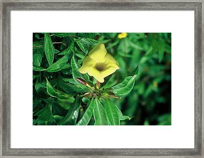 Star Framed Print by Alcina Morello