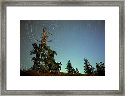 Star Trails, North Star And Old Douglas Framed Print by David Nunuk