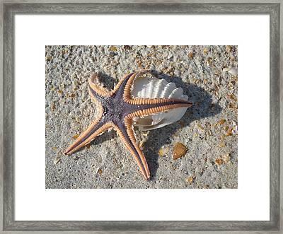 Starbather Framed Print by Warren Clark