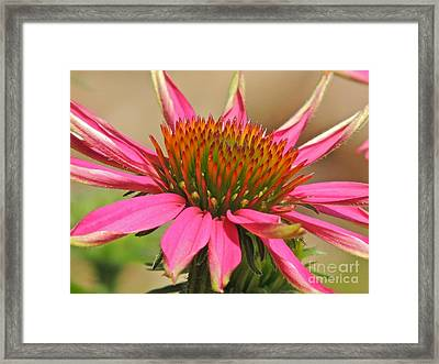 Framed Print featuring the photograph Starburst by Eve Spring