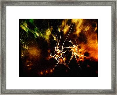 Framed Print featuring the photograph Starburst by Sadie Reneau