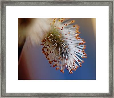 Starburst Framed Print by Susan Capuano