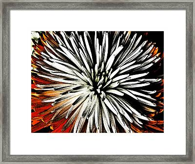 Starburst Framed Print by Yvonne Scott