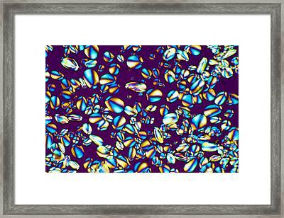 Starch Grains, Light Micrograph Framed Print