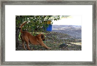 Starch Thows Legs Out Framed Print by Katrina Johns