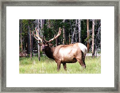 Stare Down Framed Print by Carolyn Ardolino