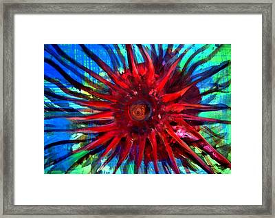 Starfish 02 Framed Print by Aquira Kusume
