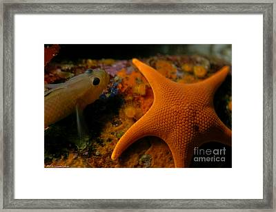 Starfish And Friend Framed Print by Mitch Shindelbower
