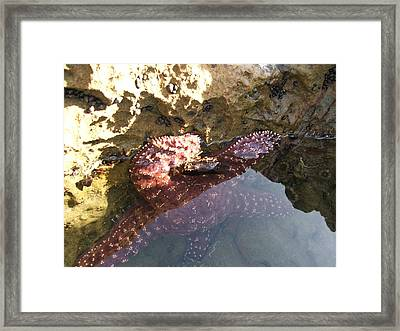 Starfish Ca Tidepools Framed Print by Daniel Small