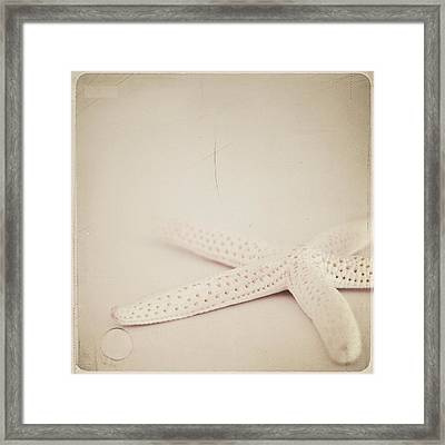 Starfish Framed Print by Laura Ruth