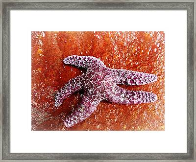 Starfish On The Wall Framed Print by Melissa  Maderos