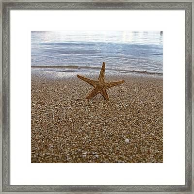 Starfish Framed Print by Stelios Kleanthous