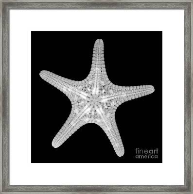 Starfish Framed Print by Ted Kinsman