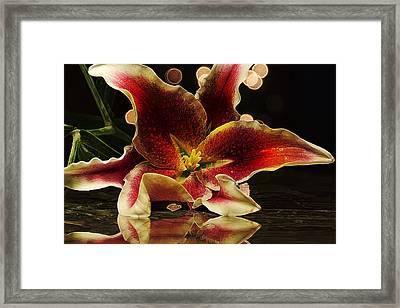 Stargazed Reflections Framed Print by Bill Tiepelman