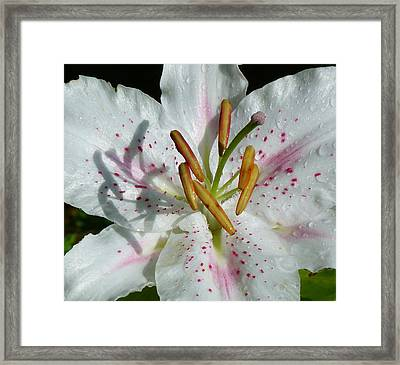 Framed Print featuring the photograph Stargazer Lily by Lynn Bolt