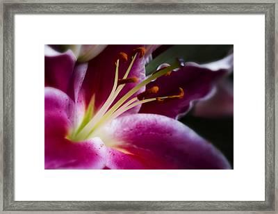 Stargazer Lily Portrait Framed Print