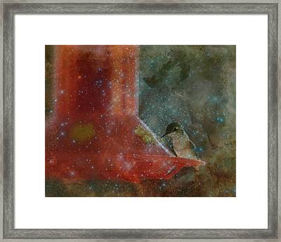 Stargazing Hummer Framed Print by Cindy Wright