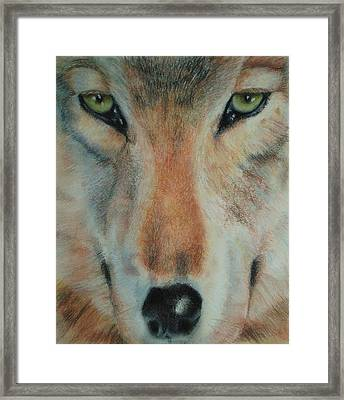 Staring Contest Framed Print by Joanna Gates