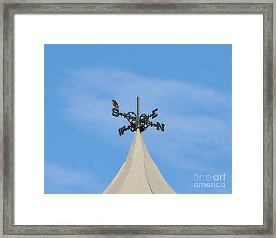 Staring Southward Framed Print by Al Powell Photography USA