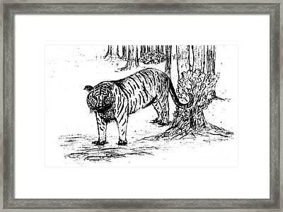 Staring Tiger Framed Print by Mashukur  Rahman