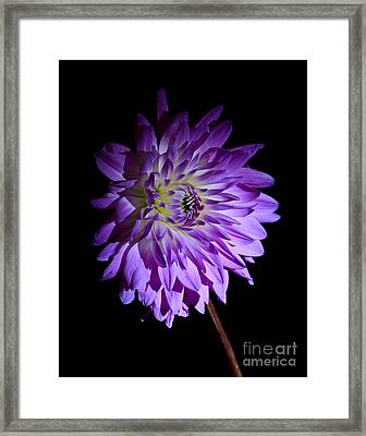 Starlight Star Bright Framed Print by Inspired Nature Photography Fine Art Photography